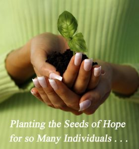Planting the Seeds …